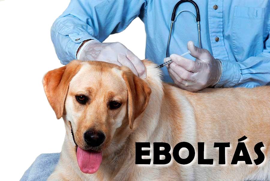 Értesítés eboltásról