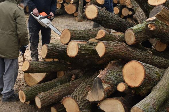 Megkezdték a szociális célú tűzifa kiszállítását a rászorulóknak